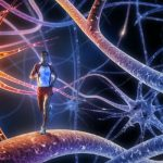 New Studies Discover Brain Hormone That Activates Fat Burning